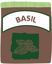 how to grow basil in your garden